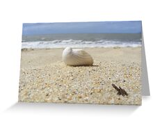 Only shell on the beach Greeting Card