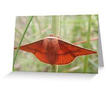 Orange Moth Greeting Card