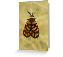 Amazing antennae Greeting Card