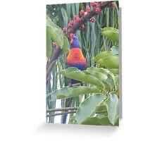 Rainbow Lorikeet - Trichoglossus haematodus Greeting Card