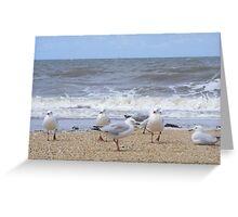 Gulls near breakers. Silver Gull - Chroicocephalus novaehollandiae Greeting Card