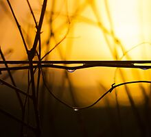 Sunset on a Wire by Darren Oster