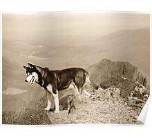 Rockhound Poster