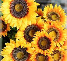 Sunflowers in Cortona, Tuscany, Italy by Antonio Paliotta