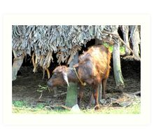 BABY WATER BUFFALO OR IN INDIA IT IS KNOWN AS A GEDDI Art Print