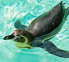 penguin by Thasan