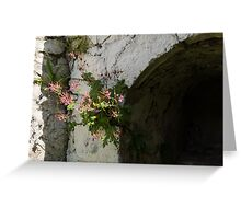 Life on Bare Rock - Fragrant Cranesbill Zdravetz Blooming on the Wall Greeting Card