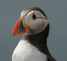 Puffin Profile by Moonlake