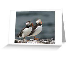Puffin Duo  Greeting Card