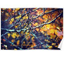 Autumn Point Poster