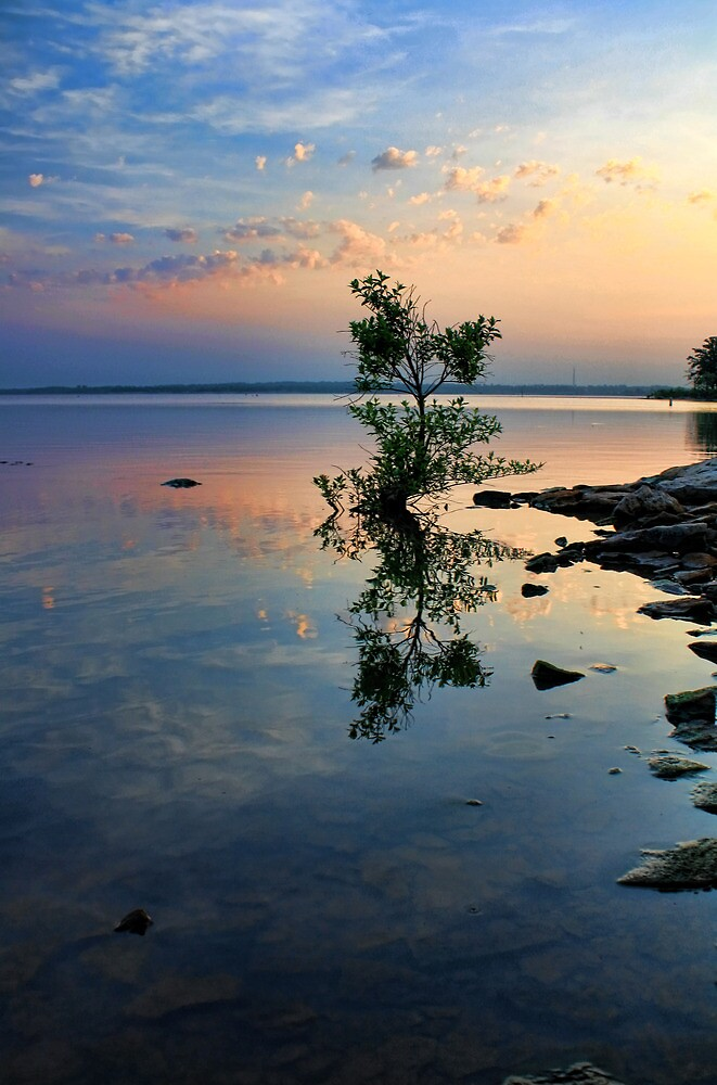 Reflectons Of Morning by Carolyn  Fletcher