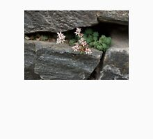 Life on Bare Rock - Pale Pink Succulents on the Wall Unisex T-Shirt
