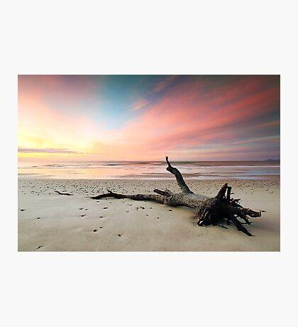 Fallen Tree Beach Photographic Print
