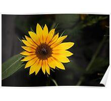 Flashy Sunflower Poster