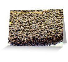 BEEHIVE IN A TREE-SOUTHERN INDIA Greeting Card