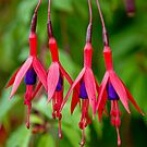 fuchsia ballet by Moonlake