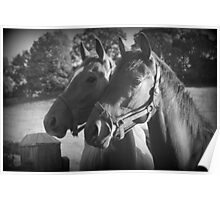 The Girls- Thoroughbred Mares Poster