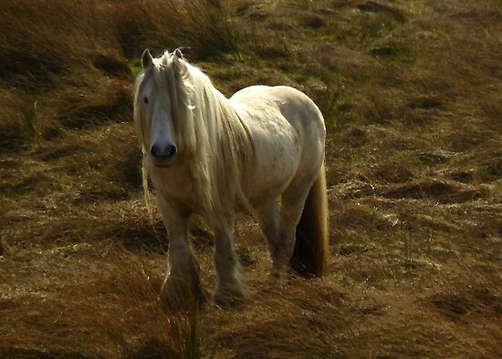 Lonely Horse by Kat Simmons
