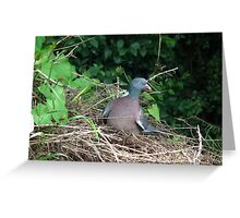Pigeon Roost Greeting Card
