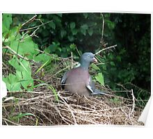 Pigeon Roost Poster