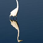 Great Egret Reflected by sally-w