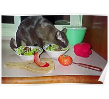 Tonkinese Cat Eating Salad Poster