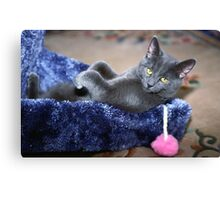 Laid Back Cat Canvas Print