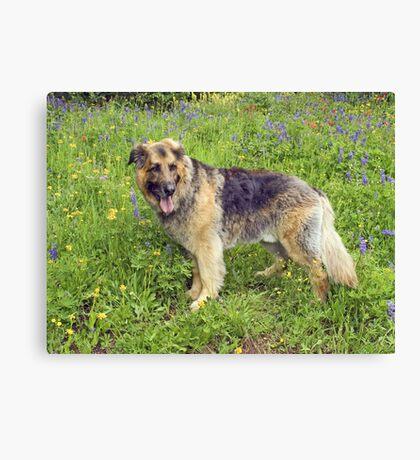 Furry Dog Among Wildflowers Canvas Print
