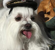 Maltese Captain by sally-w