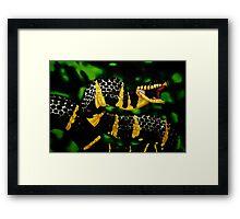 Gold ringed Mangrove snake (Boiga dendrophila) Framed Print