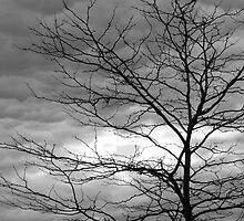 Tree and Winter Sky by John Butler