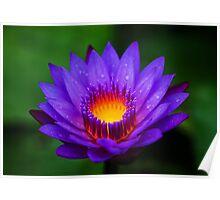 Neel-kamal [Purple-colored Lotus] Poster