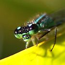 Up-close - Blue-tailed Damselfly by Jo Nijenhuis