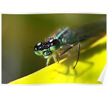Up-close - Blue-tailed Damselfly Poster