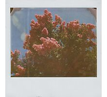 memories of summers spent at grandma's Photographic Print