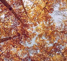 Autumn Up by Orce