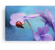 Ladybird on hydrangea Canvas Print
