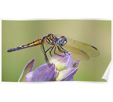 Female Blue Dasher - Dragonfly on Hosta Bud Poster