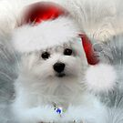 Hermes the Maltese at Christmas by Morag Bates