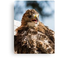 royal falcon Canvas Print