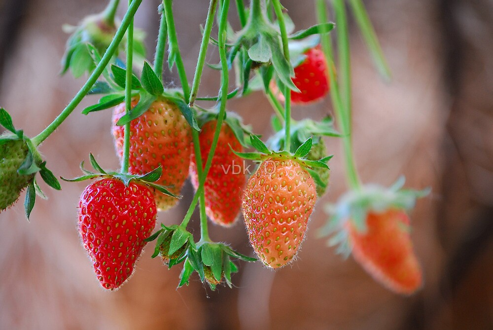 Strawberries by vbk70