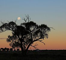 LoneTree by Mark Cooper
