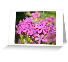 Pinks Greeting Card