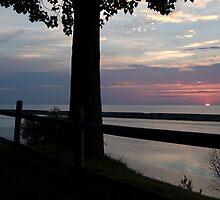 Pink Sunset behind Fence by Elizabeth Carpenter