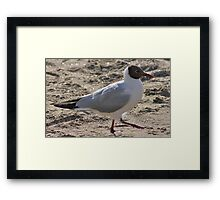 Out for a stroll ! Framed Print