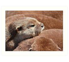 The Otter Huddle .... Art Print