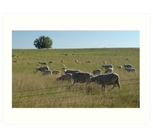 AND WHO ARE YOU?  SHEEP NEAR BIG TIMBER, MT Art Print