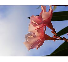Pink flowers, blue skies, end of afternoon light Photographic Print