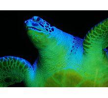 Sea Turtle .... Photographic Print
