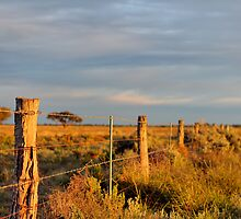 Fence Line II by Mark Cooper
